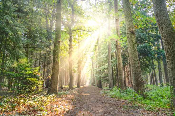 forest-fog-sunny-nature-615348.jpeg